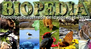 biodiversidad y biomas