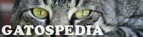 Gatospedia.com