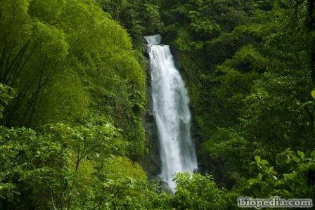 Selva tropical BIOPEDIA