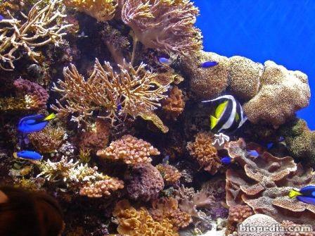 arrecife de coral1