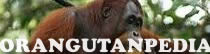 Orangutanpedia