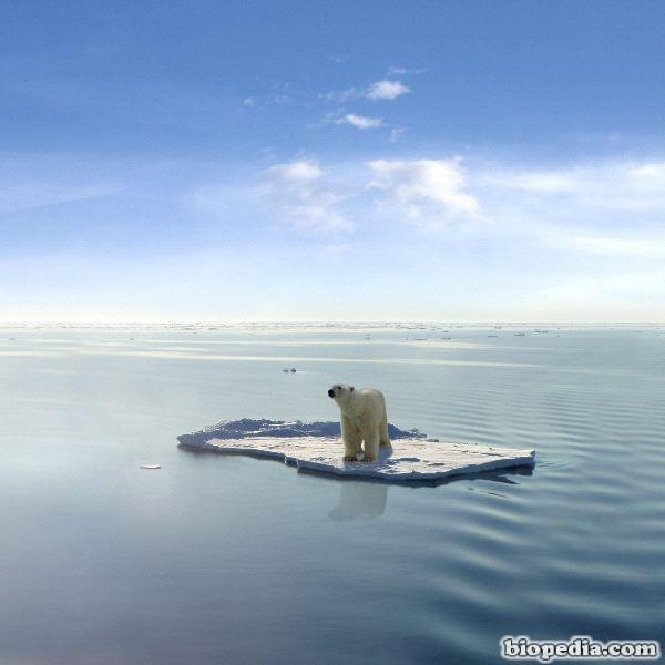 foto de oso polar