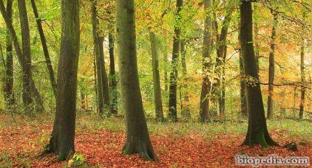 Bosques de Wytham