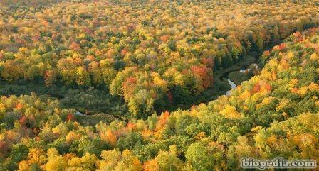 bosque caducifolio del este