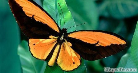 mariposa wallace