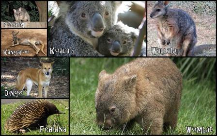 animales-australia