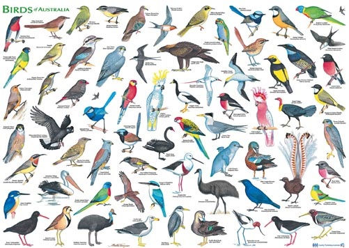 Australia: sus hábitats y animales | BIOPEDIA