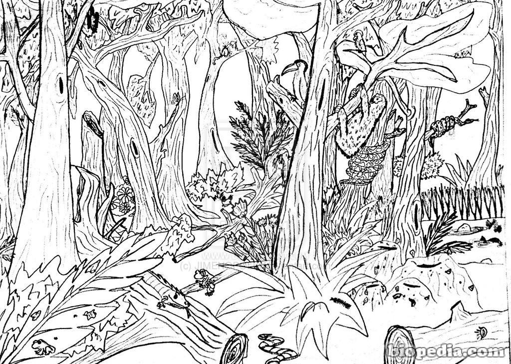Habitats Para Colorear Biopedia