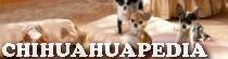 Chihuahuapedia
