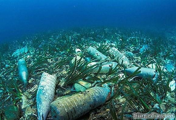 La contaminación de los océanos | BIOPEDIA