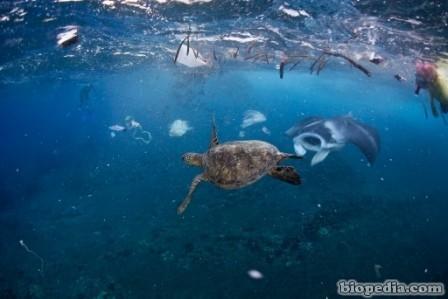 ecologia-oceano