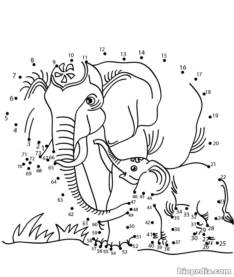 Animales para conectar con puntos   BIOPEDIA