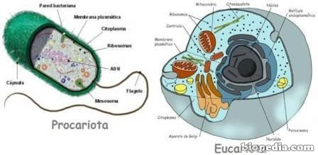 eucariota-procariota