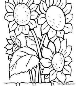 Flores para colorear | BIOPEDIA