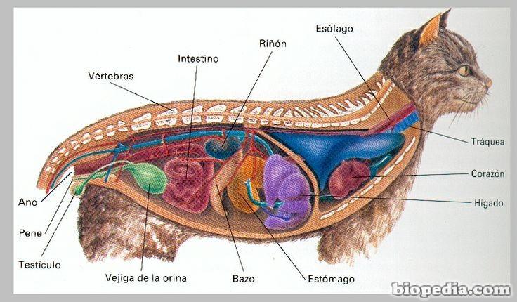 Anatomía animal | BIOPEDIA