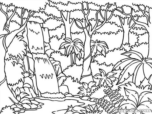 Habitats para colorear | BIOPEDIA
