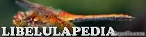 Libelulapedia