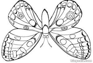 Colorea A Los Insectos Biopedia