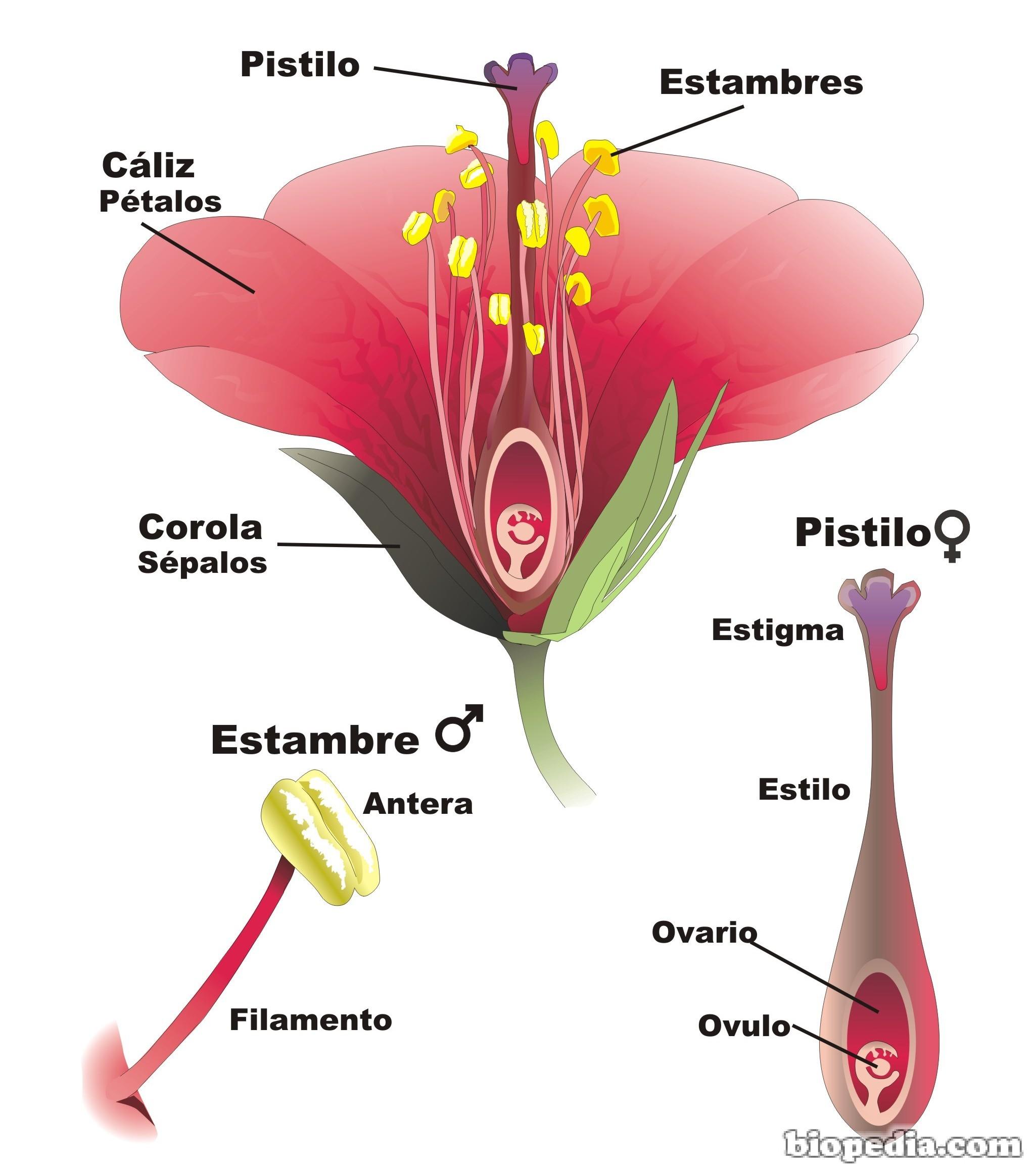 Las estructura de una planta: sus partes | BIOPEDIA