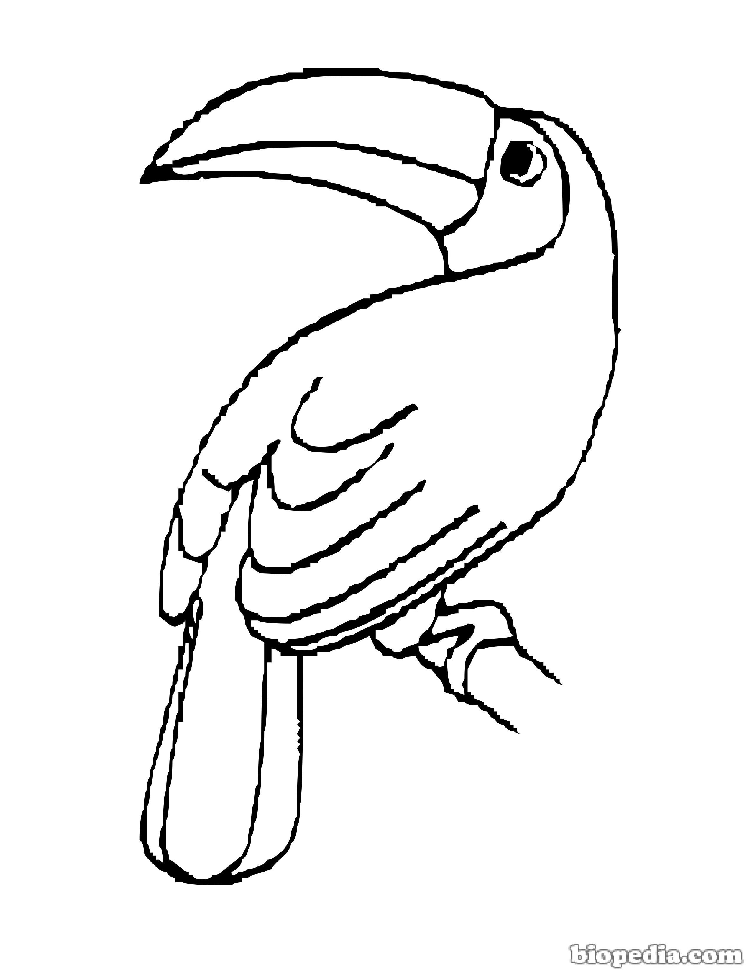 Aves para colorear | BIOPEDIA