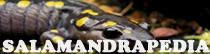 Salamandrapedia