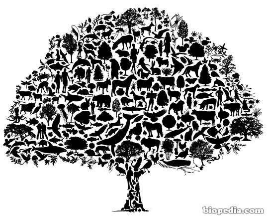 Biodiversidad Significado Y Tipos Biopedia
